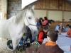 2010 máj - Výlet na salaš a exkurzia chovu koní