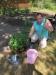 2018 máj - Výsadba priesad v záhradke zariadenia